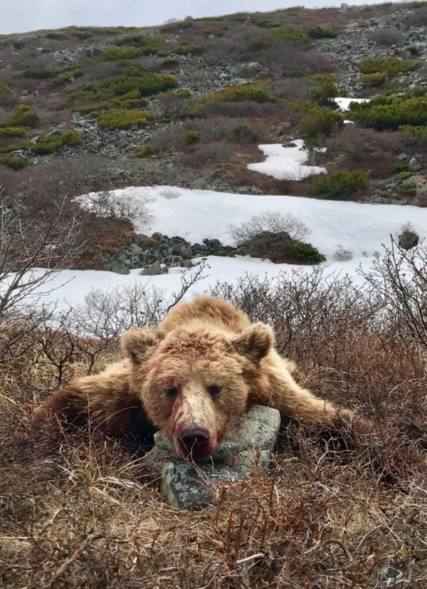 brown-bear-hunt-magadan (2)