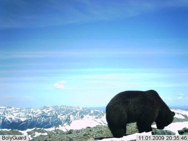 baikal-bear-hunt7