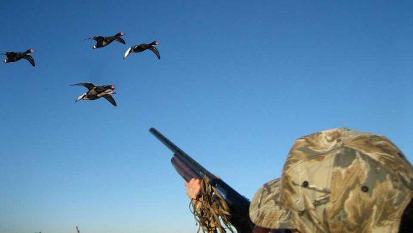 geese-shooting-estonia (3)
