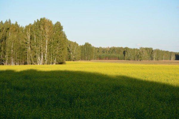 siberian-roe-dder-hunt-russia-tyumen (8)
