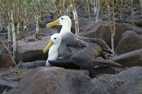 fishing-and-tourism-equador-and-galapagos (1)